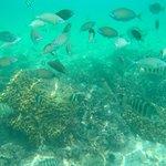 目の前の海の魚達