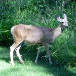 Deer visit every day