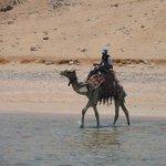 l'ospite fisso...il cammello