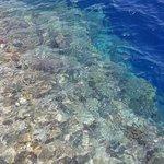barriera corallina vista dal pontile