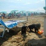 """beach dog """"spiaggi attrezzata per cani"""""""