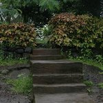 Steps leading to the pond..