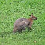 Kangaroo :)