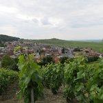 Vignoble près du phare de Vezernay
