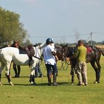 Spend an unforgettable day with friends playing polo