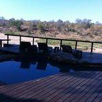 piscina con vista savana