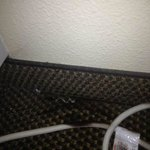 Black mold on carpet and A/C power cord