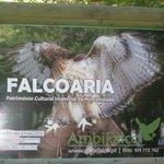 announcing the falcon show