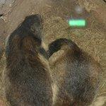 Paradiso delle marmotte