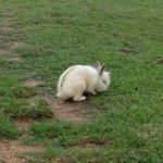 amici coniglietti