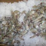 Fresh Local Seafood Daily ( Shrimp )