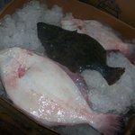 Fresh Flounder . . . .
