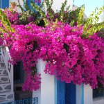 Lovely house in Oia.