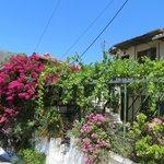 Port Vassiliki - beautiful flowers