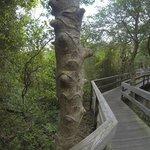 Foto de The Sunken Forest