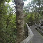 The Sunken Forest Foto