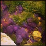 Saw lots of these purple jelly fish near the old monastery