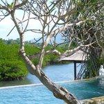 piscine et mangrove