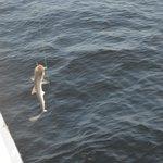 Shark on!