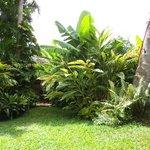 Bananas & Backyard Landscape