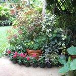 Backyard Patio Lanai