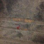 Disgusting carpets