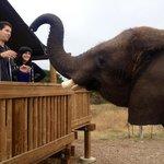 Elephant birthday breakfast