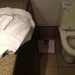 Outro ângulo com a barata junto ao vaso sanitário.