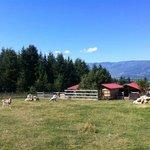 The goats' heaven!