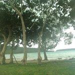 Velit Bay Plantation