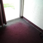 Moldy carpet