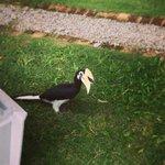 hornbill everywhere