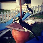 hornbill eating leftovers in front of room