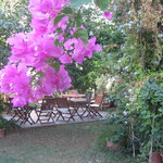 The last garden kept alive in the heart of Bodrum