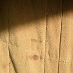 bedbug fecal stains?