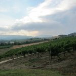 Vineyards at Cioccoleta