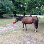 Even horses like swing ball.