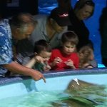 Touching the Stingrays