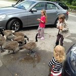 Feed the ducks!