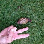The resident garden snail!