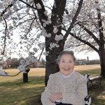 97歳の春。桜並木でひと休み。来年もここの桜を見に来ようね☆