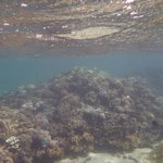 more snorkelling