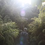 Ron's ramble - lots of lush vegetation