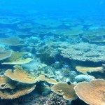 Table corals (April 2013)