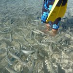 fish right at shore line