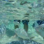 fish swimming around my boys' legs