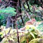 Incroyable un p'tit écureuil pas craintif du tout