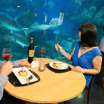 Couples enjoying their meal with views of the stunning Endless Oceans display