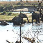 Elephants going for a swim, right in front of our lodge