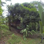 View of the lush green jungle